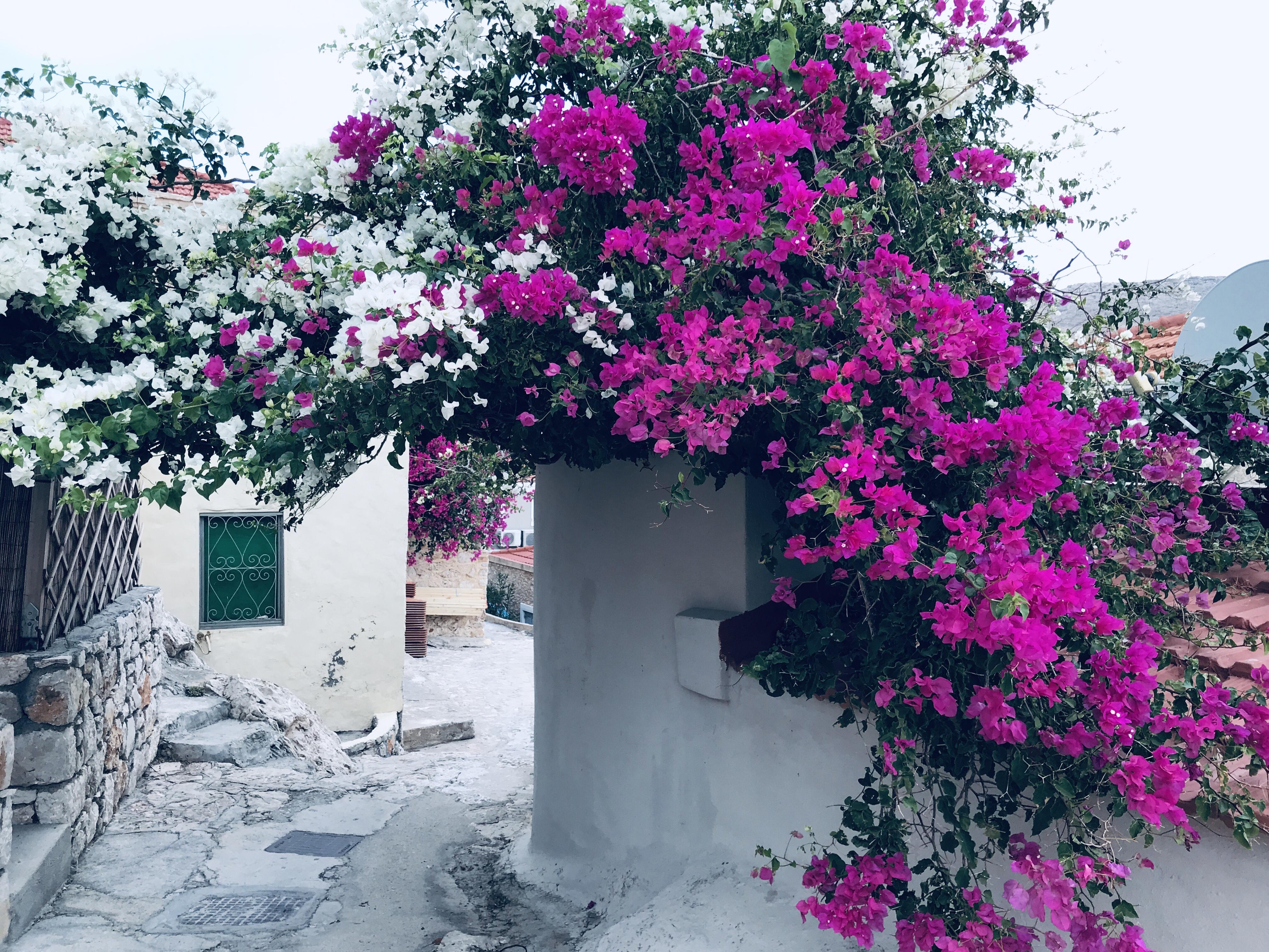 Bloemen van Chalki