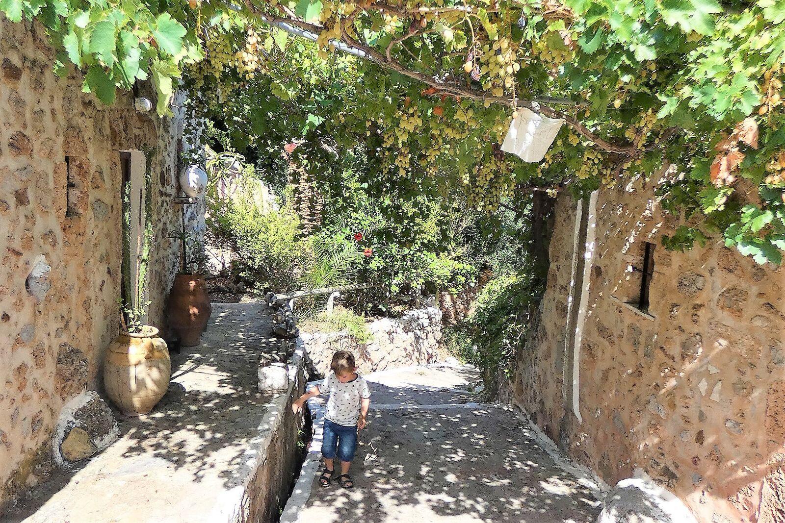 Nazomeren of voorzomeren op Kreta