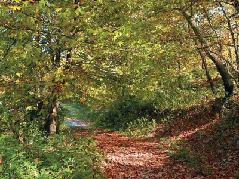 Natuur omgeving Veria